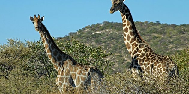 Where to flashpack on safari: 7 potential destinations